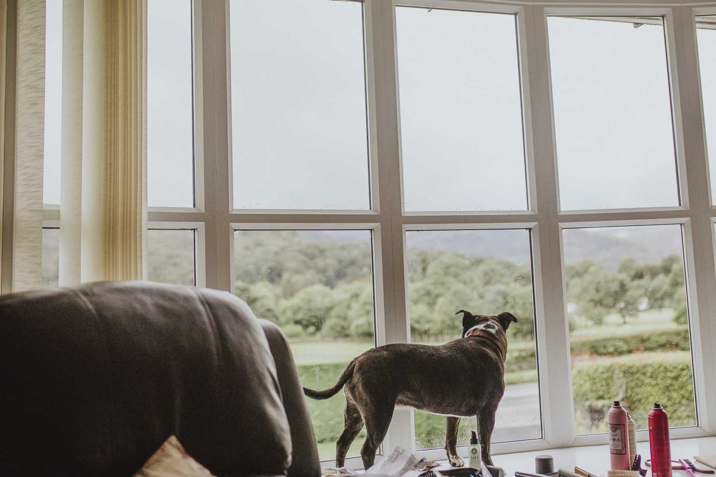 Dog standing and looking out of window for Cumbria wedding by Joshua Wyborn