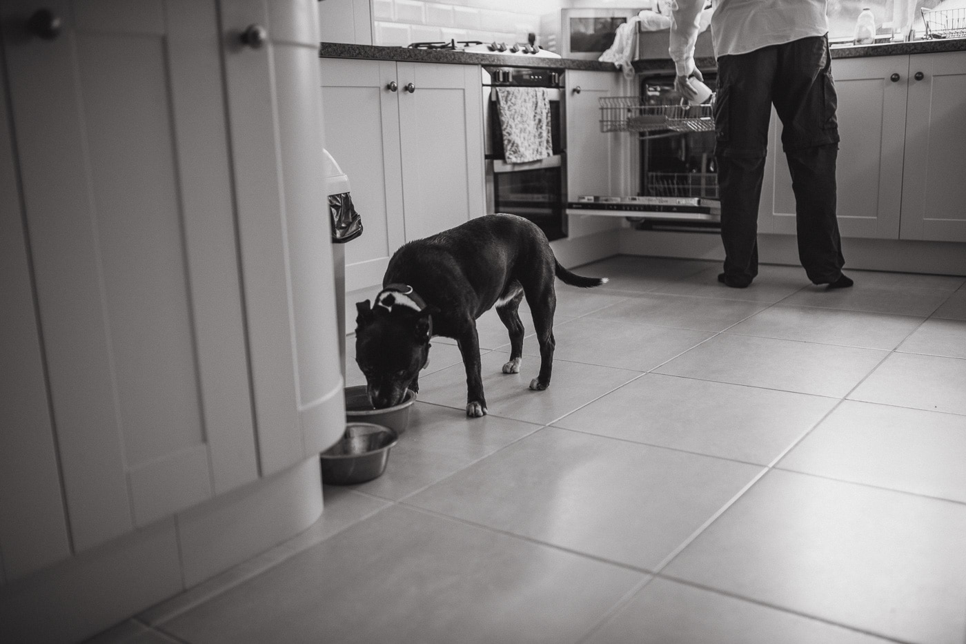 Dog having breakfast for Cumbria wedding by Joshua Wyborn