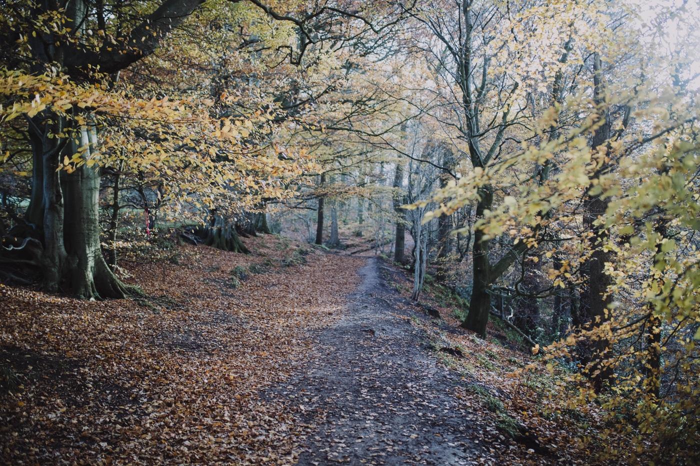 Path through autumn wooded area by Joshua Wyborn Photographic