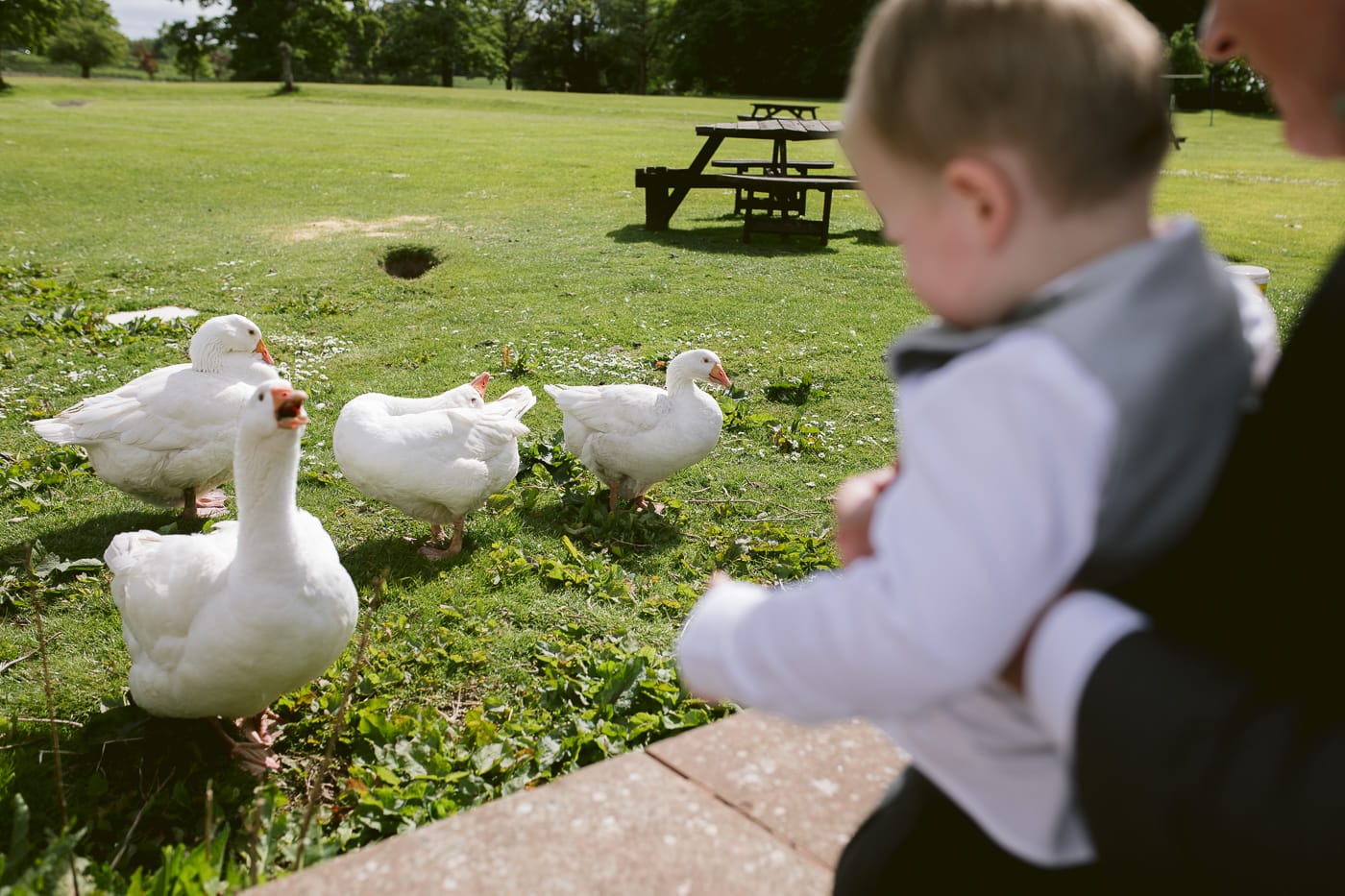 Little Boy Feeding Geese on the Grass Photography Photo Shoot